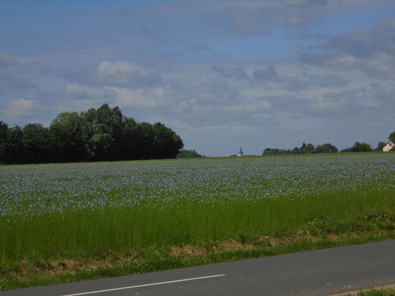 promenade dans la campagne Normande  Photos12