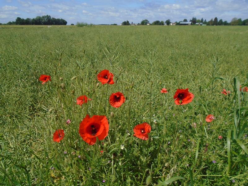 promenade dans la campagne Normande  Photos13