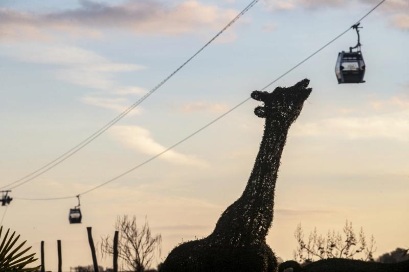 Télécabine débrayable (TCD8) Nuage de Beauval – Zoo de Beauval D95b4010