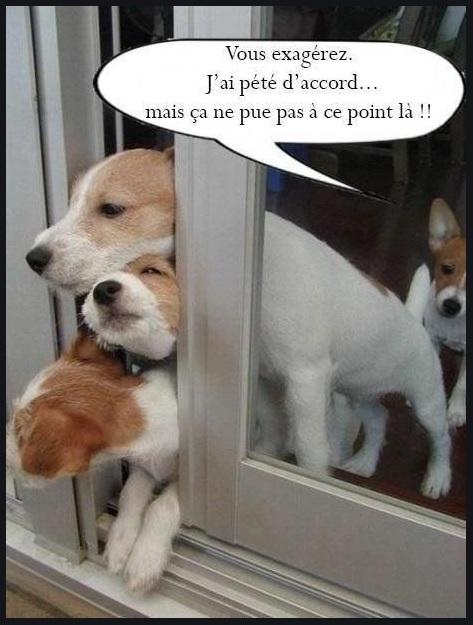 Humour en image du Forum Passion-Harley  ... - Page 12 Ane210