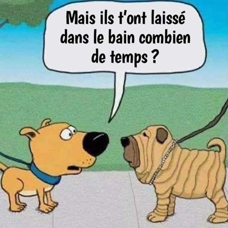 Humour en image du Forum Passion-Harley  ... - Page 3 Le_bai10