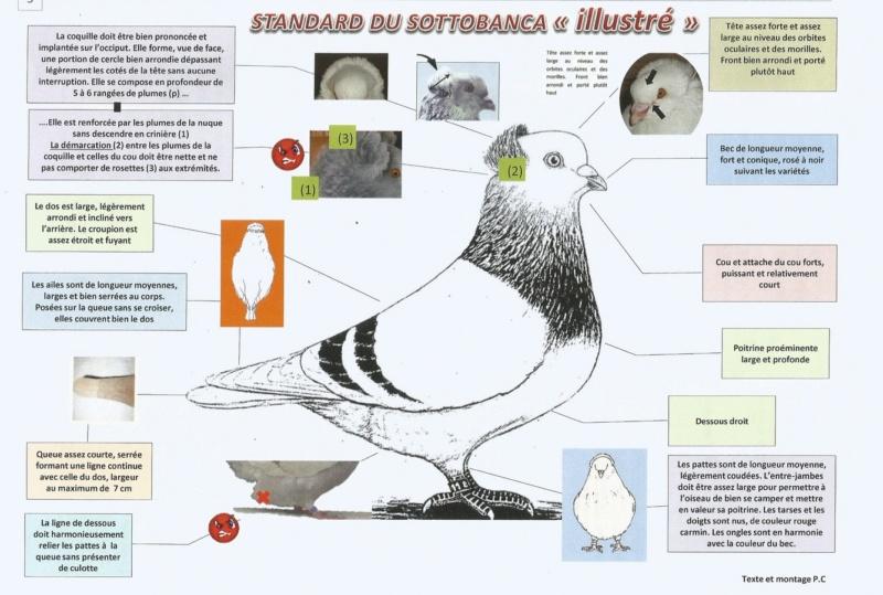 STANDARD DU SOTTOBANCA << ILLUSTRÉ>> 412