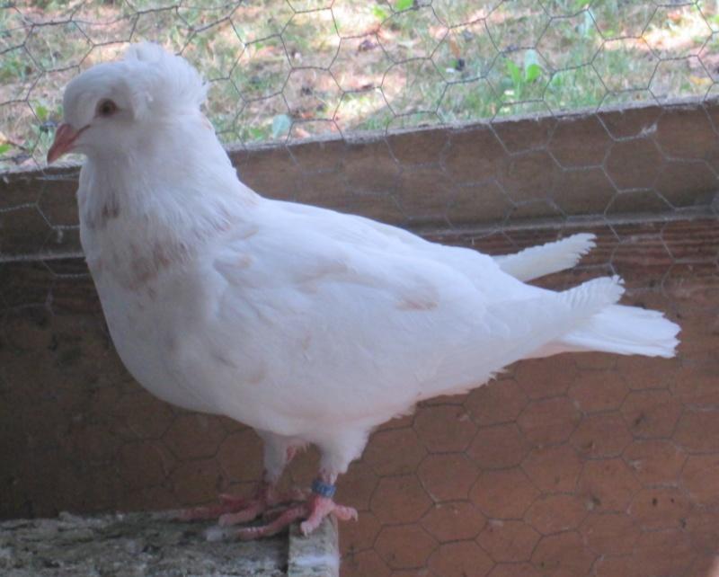 élevage à LEPORCQ Rémi  Img_3125