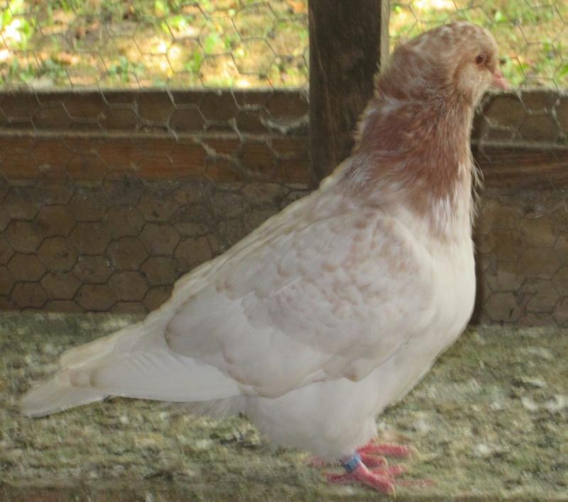 élevage à LEPORCQ Rémi  Img_3127