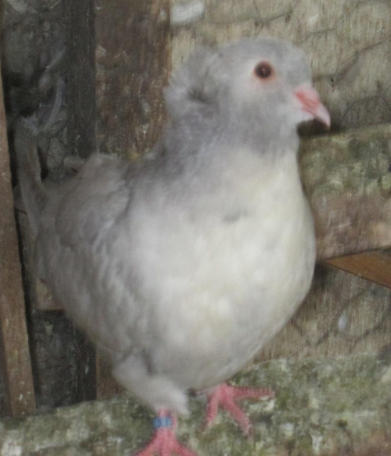 élevage à LEPORCQ Rémi  Img_3129