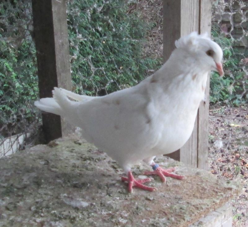 élevage à LEPORCQ Rémi  Img_3131