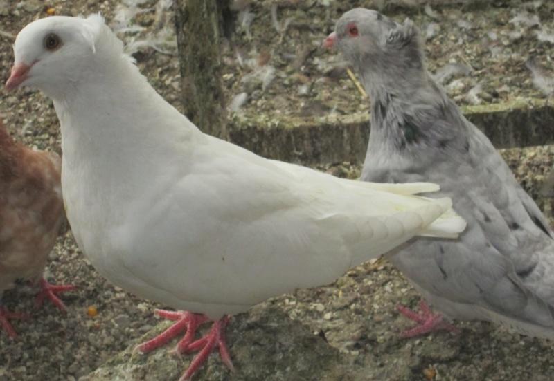 élevage à LEPORCQ Rémi  Img_3136