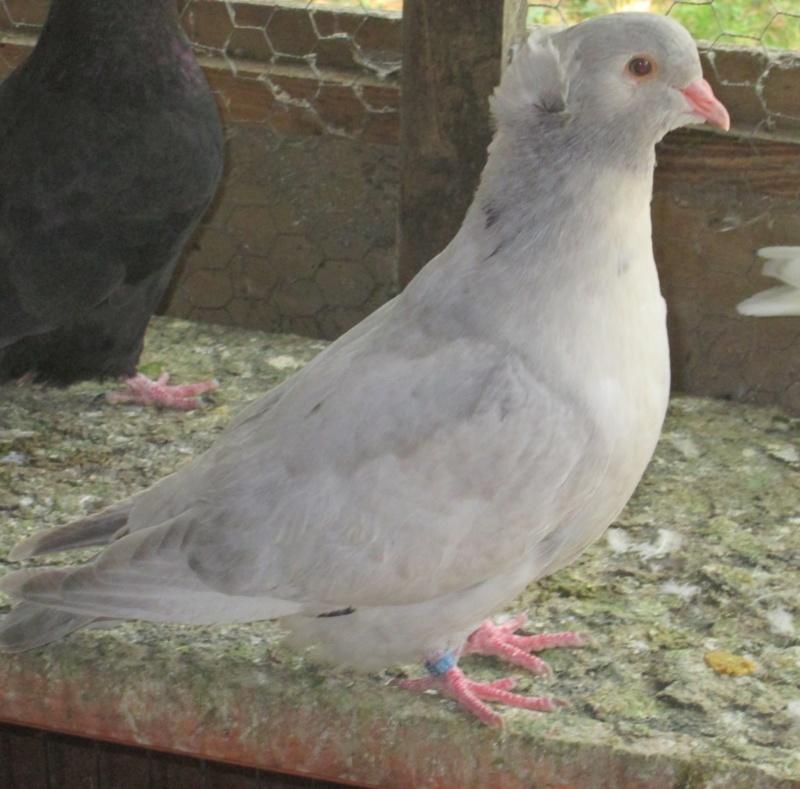 élevage à LEPORCQ Rémi  Img_3142