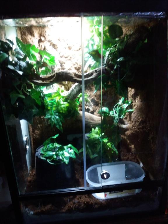 Mon terrarium pour spilota cheynei 20181210