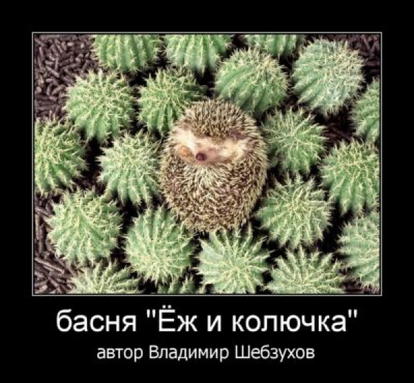 Владимир Шебзухов  «Стихи про ёжиков» A__y_s10