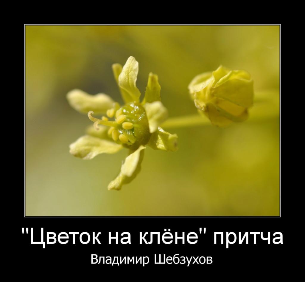 Притчи от Владимира Шебзухова - Страница 15 Cccccc32