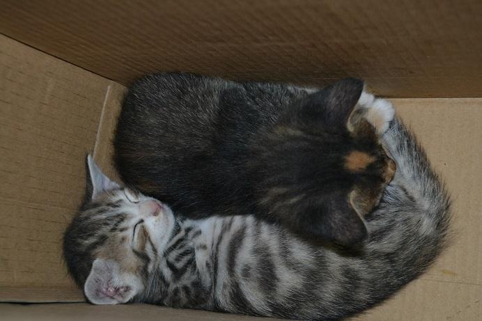Οι τρεις μικρές δεσποινίδες (συν τα εφτά τους αδερφάκια) θέλουν σπίτι μόνιμο <3  Dsc_0414