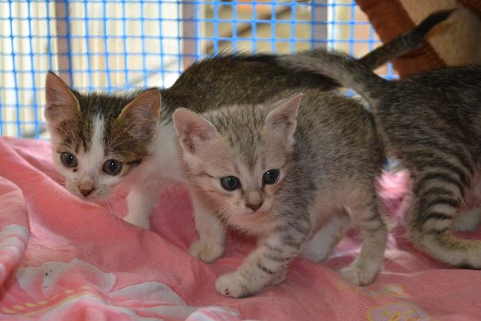 Οι τρεις μικρές δεσποινίδες (συν τα εφτά τους αδερφάκια) θέλουν σπίτι μόνιμο <3  Dsc_0421
