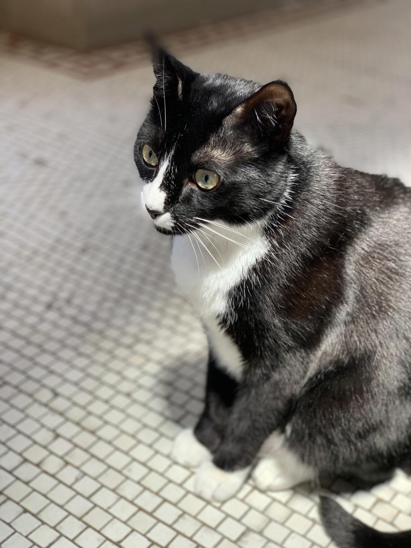 Show Me Your CAT!  C9c9e510