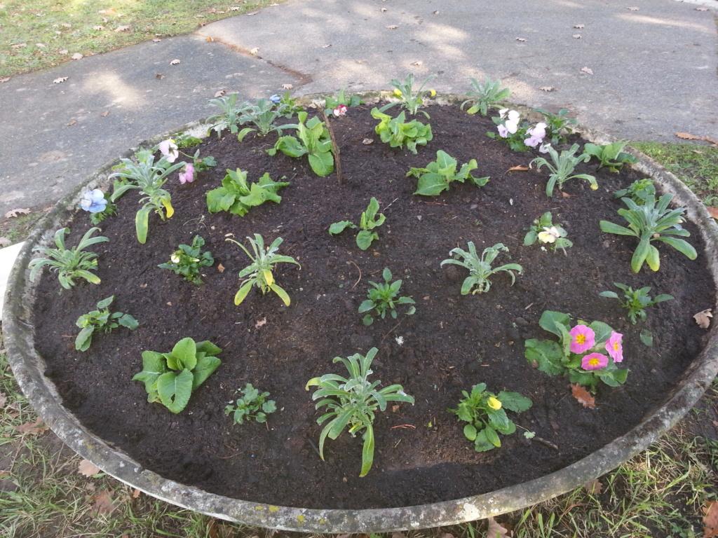 Le jardin de notre ami Sophat 20201210