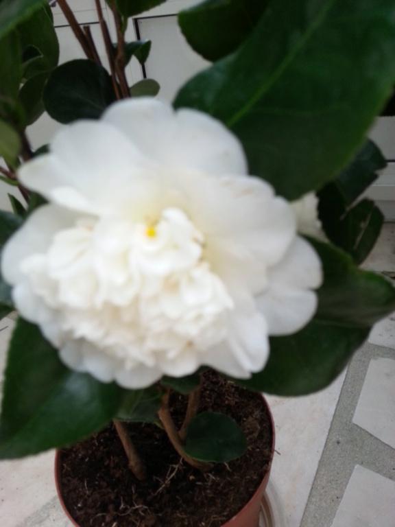 Le jardin de notre ami Sophat 20210114