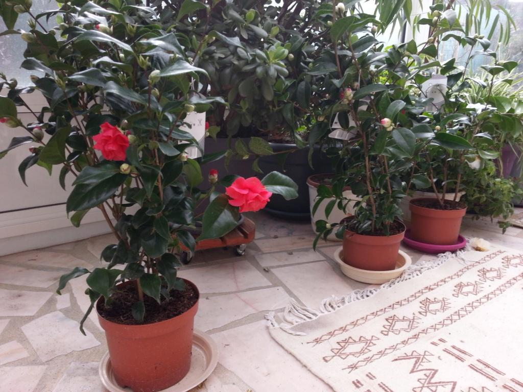 Le jardin de notre ami Sophat 20210222