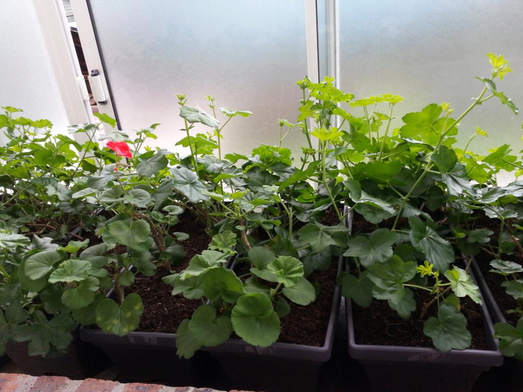 Le jardin de notre ami Sophat 20210224