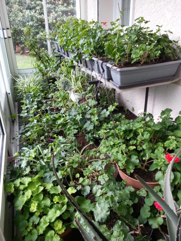 Le jardin de notre ami Sophat 20210226