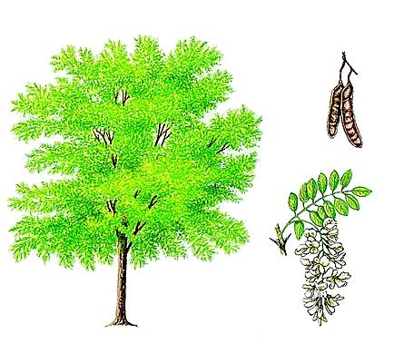 Jeu : Devinez l'arbre ! - Page 5 10031210