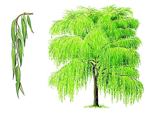 Jeu : Devinez l'arbre ! #2 - Page 10 10031410