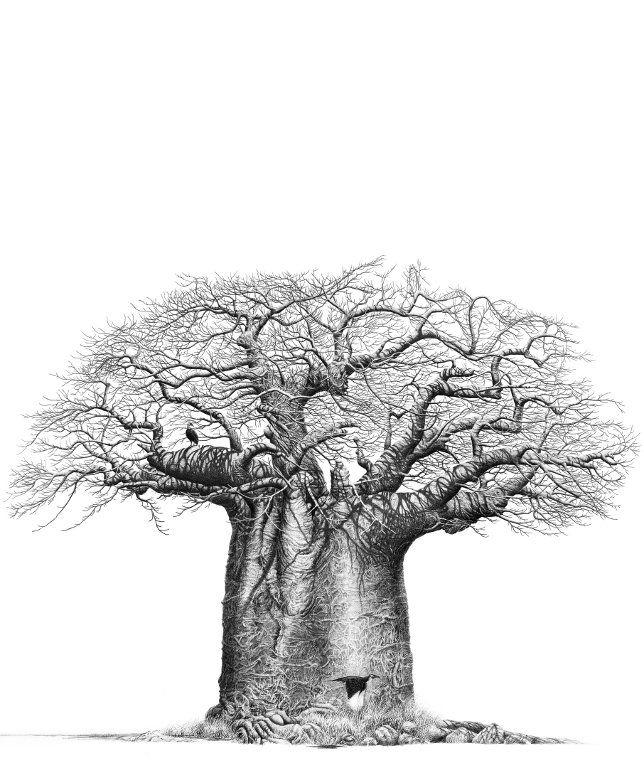 Jeu : Devinez l'arbre ! #2 - Page 10 33533e10