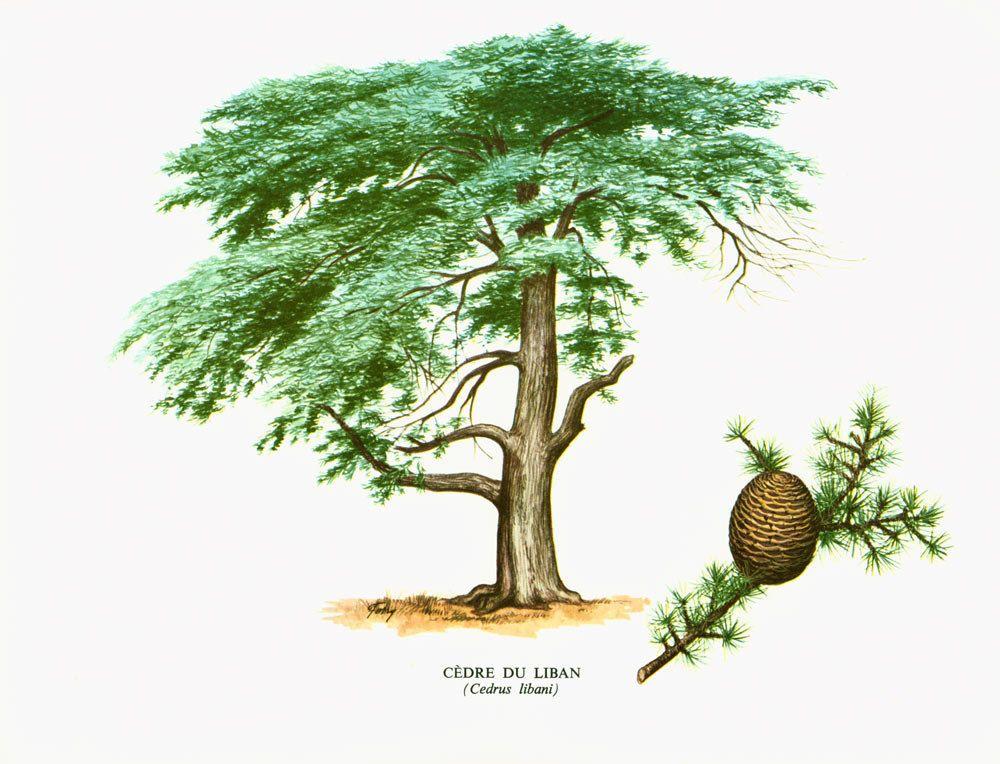 Jeu : Devinez l'arbre ! #2 - Page 7 B11ef810