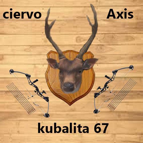ciervo axis taxidermia Axis10