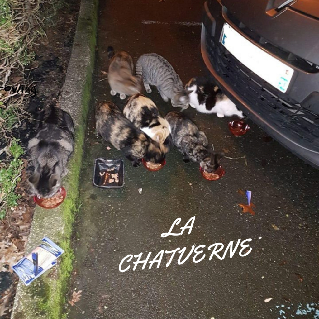 SITE LA CHATVERNE  We_are12