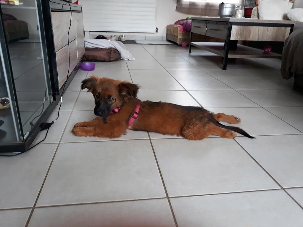 Chups (ex-Sangria) - femelle - chez Andreea (Târgu Frumos) - réservée adoption (21) 20180613