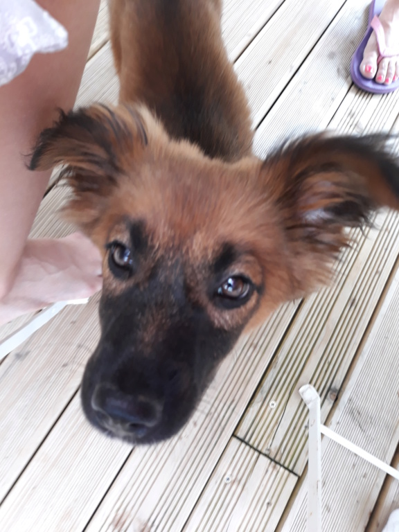 Chups (ex-Sangria) - femelle - chez Andreea (Târgu Frumos) - réservée adoption (21) 20180713