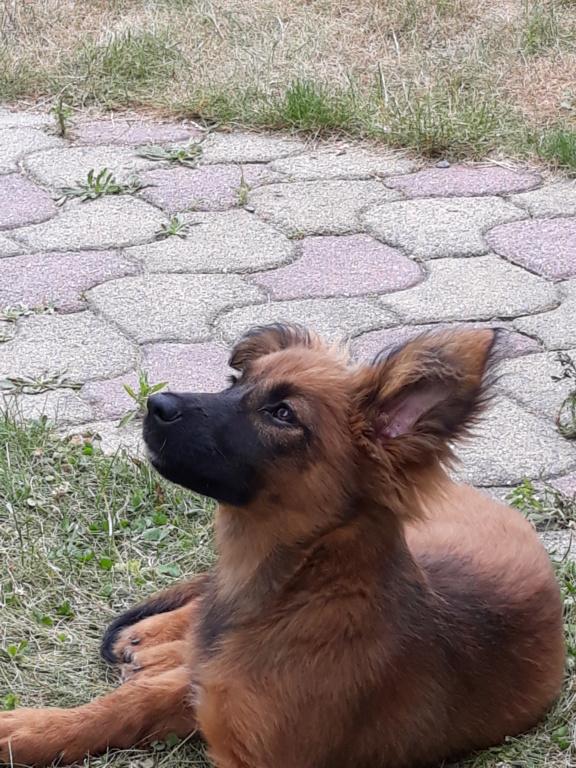 Chups (ex-Sangria) - femelle - chez Andreea (Târgu Frumos) - réservée adoption (21) - Page 2 20180722