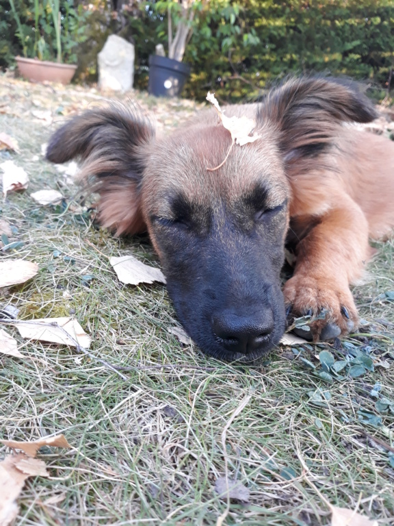 Chups (ex-Sangria) - femelle - chez Andreea (Târgu Frumos) - réservée adoption (21) - Page 2 20180816