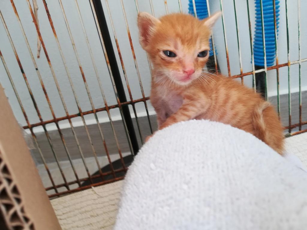 Αδέσποτα γατάκια  Img_2011
