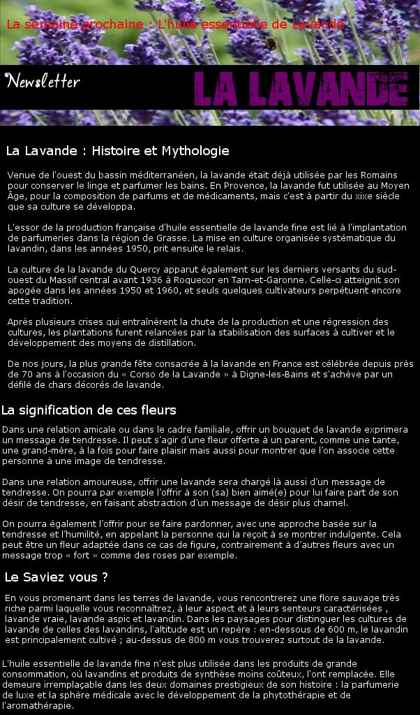 Newsletter 20 - Les Fleurs : La lavande Lavand10