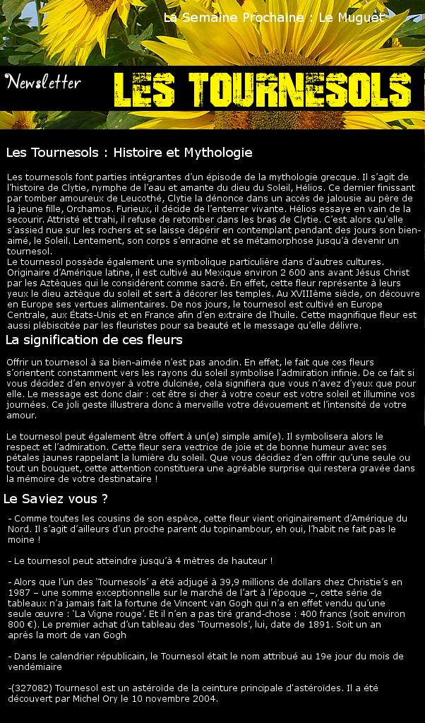 Newsletter 16 - Les Fleurs : Les tournesols Tourne10