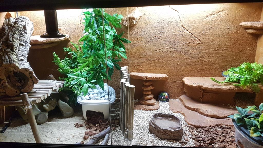 Mes 2 gecko léopard 20181013