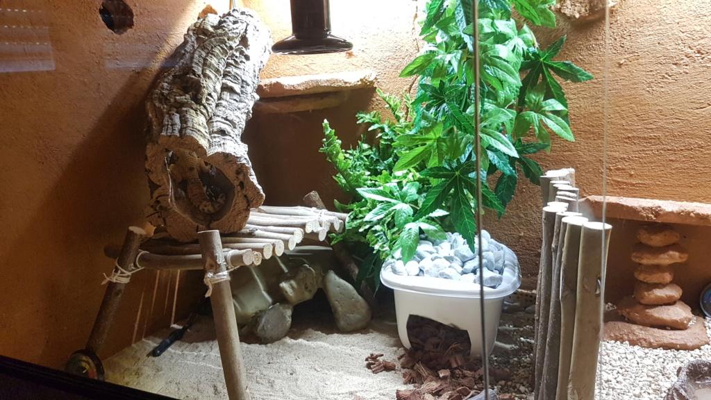 Mes 2 gecko léopard 20181015