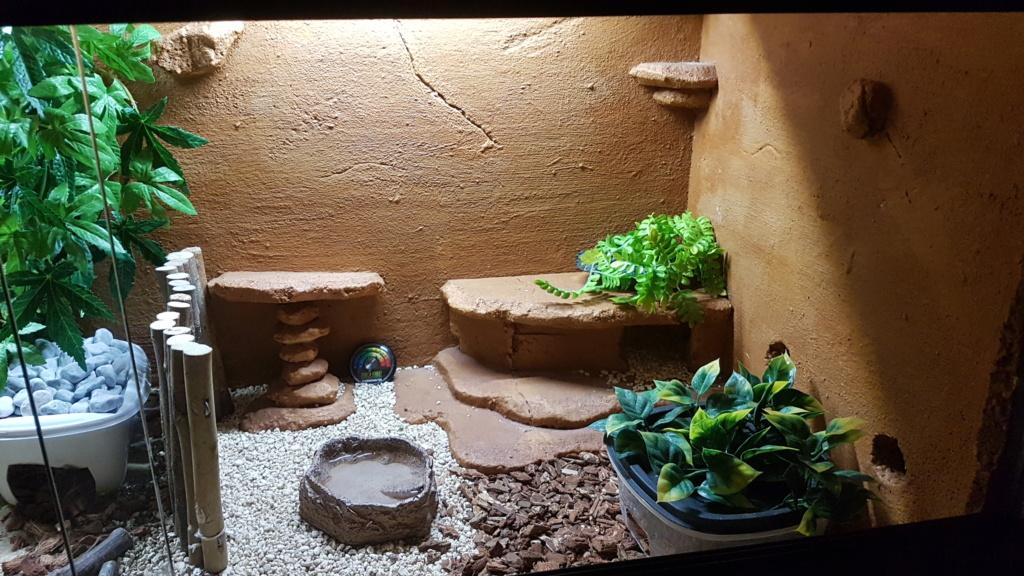 Mes 2 gecko léopard 20181016
