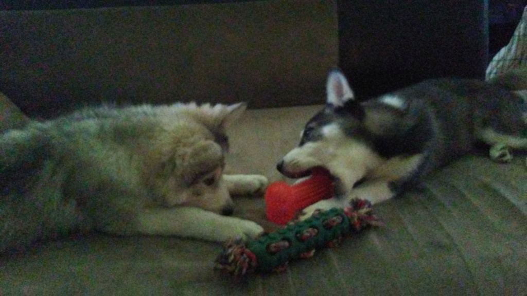 Nanook and Riley's scrap book, with big brother Balou and maybe Echo the cat - Page 2 02251912