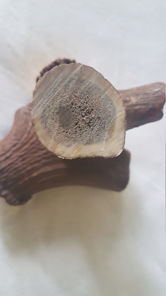 where to find antler for nut construction 20190511