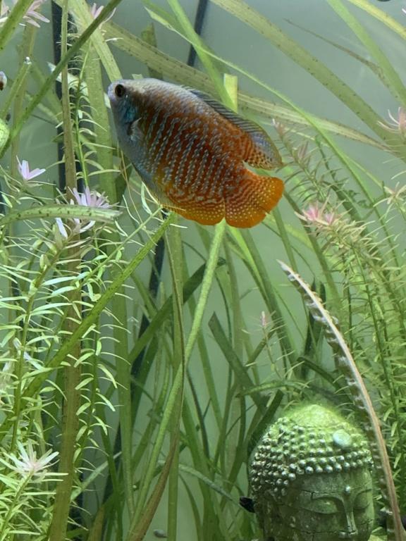 180L biotope asiatique 11ee5110