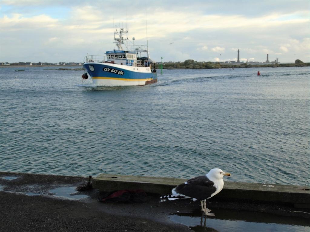 [VIE DES PORTS] Quelques bateaux de pêche (sur nos côtes Françaises) - Page 9 Dsc04715