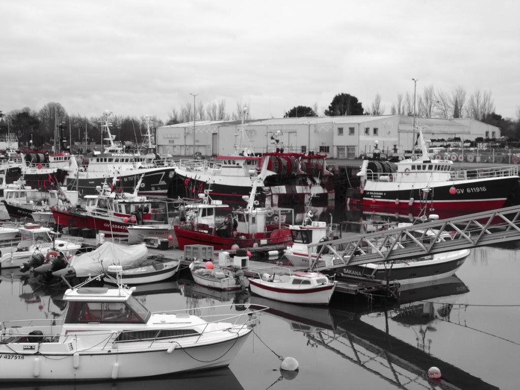 [VIE DES PORTS] Quelques bateaux de pêche (sur nos côtes Françaises) - Page 3 Dsc05812