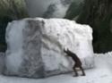 Michel-Ange : Il peccato...A graver dans le marbre !! Ma210