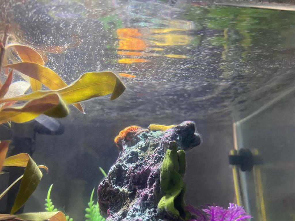Fillaments et particules blanches dans mon premier aquarium  Img_4212