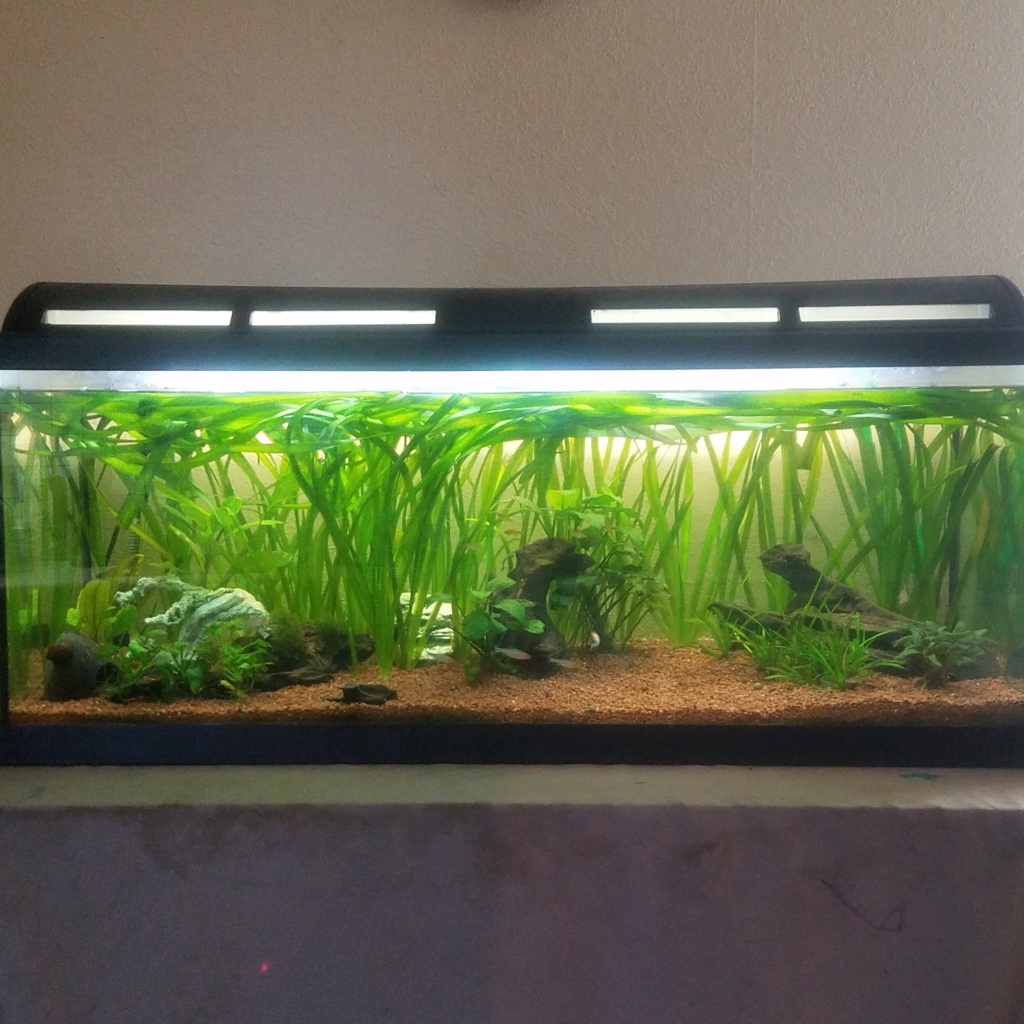 redémarrage aquarium.  Vue_gz11