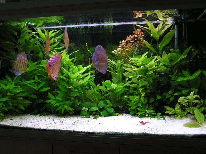 KH GH pour aquarium à Discus P1010010