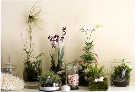 Mini jardin int rieur - Jardin miniature d interieur ...