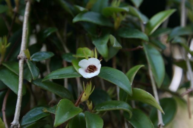 Fleurs au 1er janvier dans mon jardin Codona10